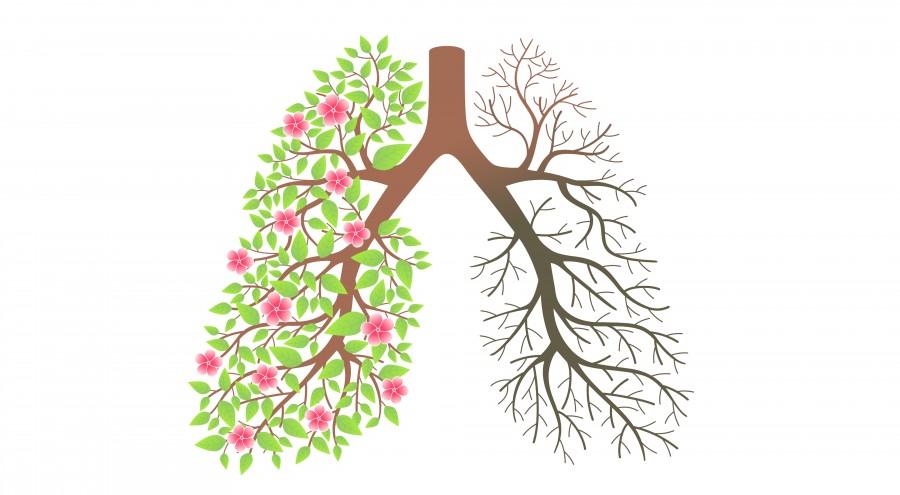 ۹ ماده غذایی مفید برای ریه