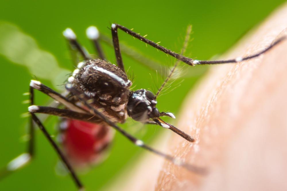 نقش حشرات و جوندگان در آلودگی مواد غذایی و انتقال بیماریها