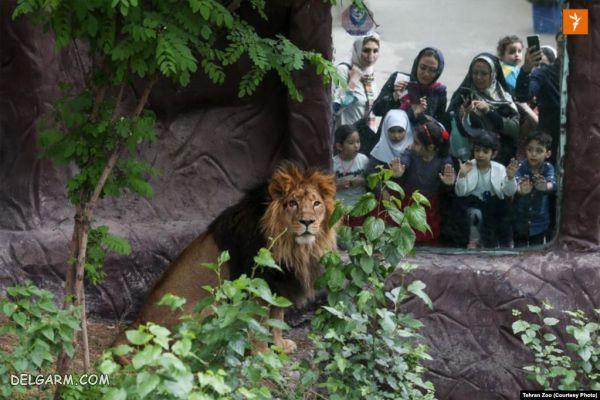 هیرمان در باغ وحش ارم