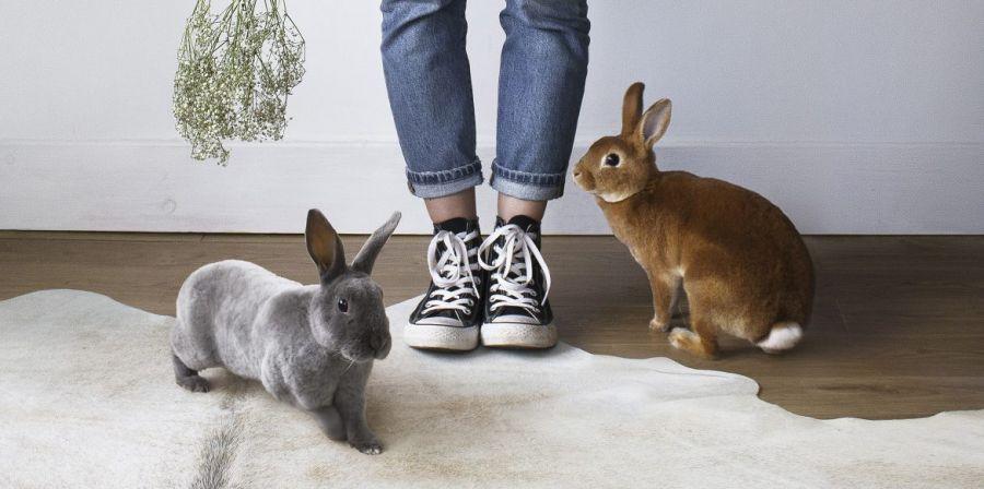 سوالات رایج درباره نگهداری از خرگوش | نحوه نگهداری و تغذیه خرگوش