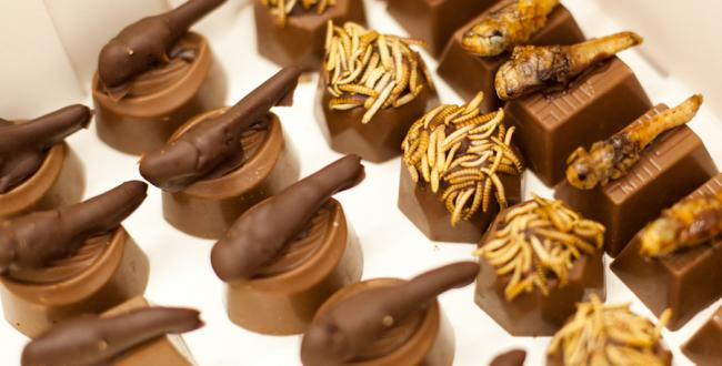 شکلات های حشراتی