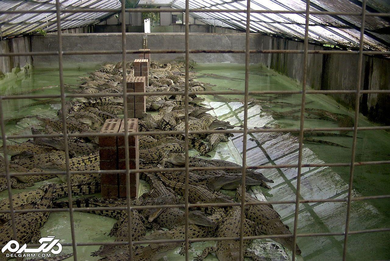 مزرعه تمساح