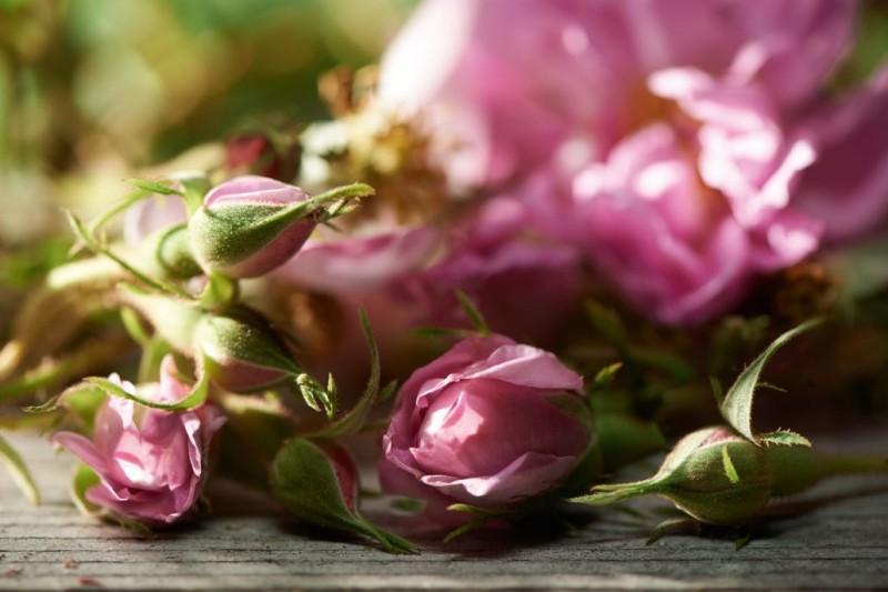 طرز تهیه مربای گل سرخ تازه (مربا گل محمدی)
