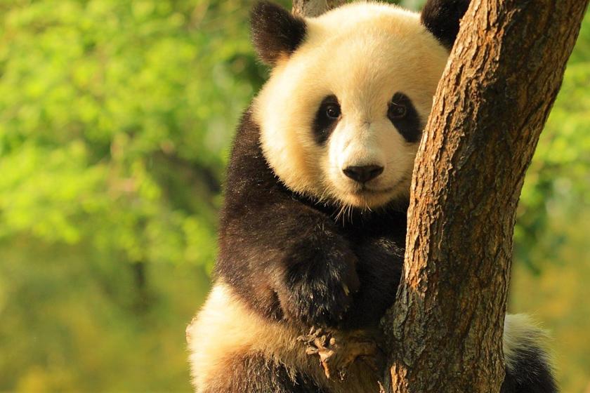 تعبیر خواب خرس و خرس قطبی - دیدن خرس در خواب چه تعبیری دارد؟