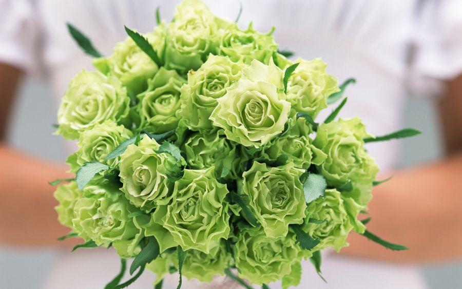 گل رز سبز رنگ