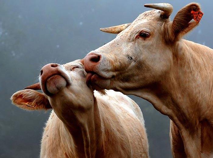 """""""رمانتیک ترین حیوانات"""" دنیا را بشناسید + تصاویر"""
