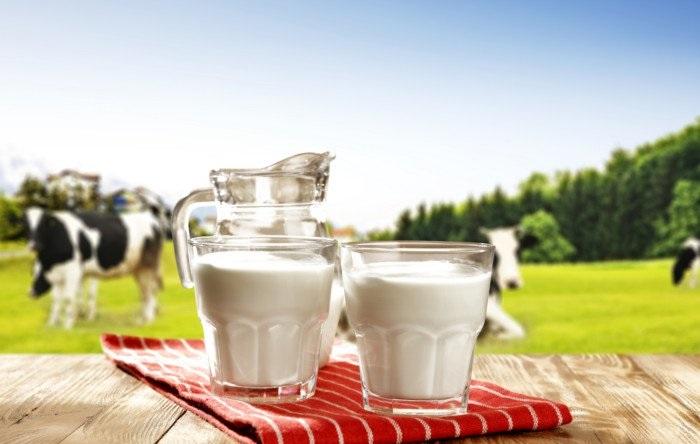 همه چیز در مورد فواید و خواص شیر گاو