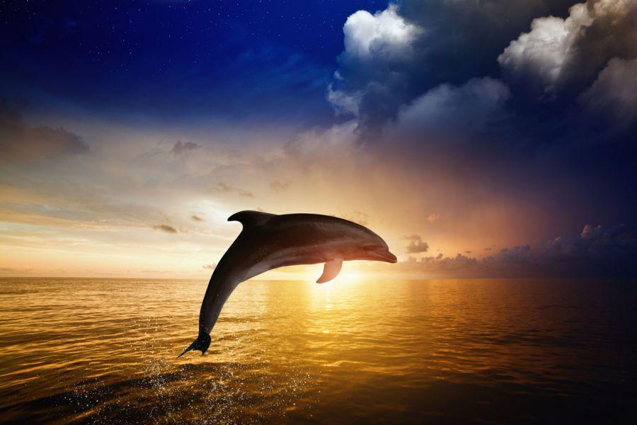 تفکر دلفینی چیست؟