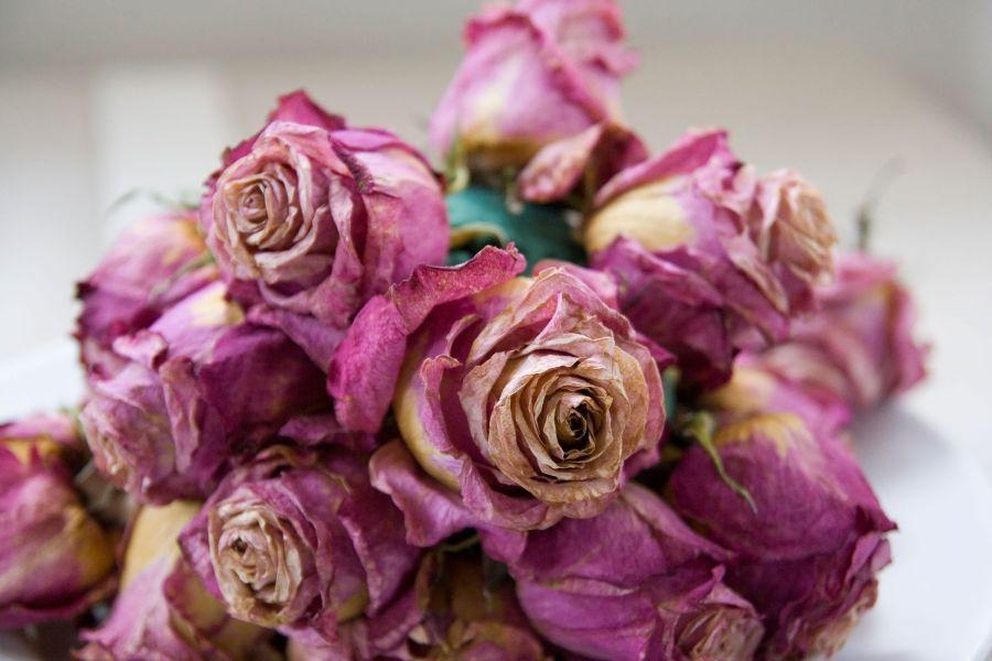 روش خشک کردن گل طبیعی رز بدون تغییر شکل و رنگ