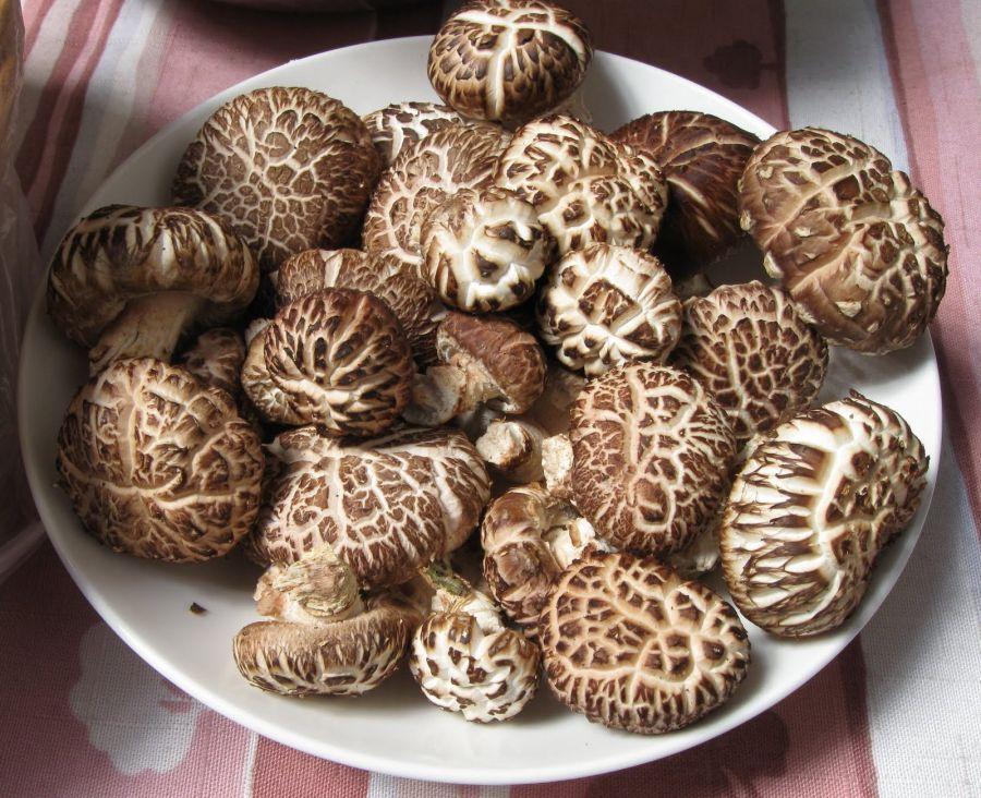 خواص شگفت انگیز قارچ شیتاکه برای سلامتی و درمان زگیل تناسلی