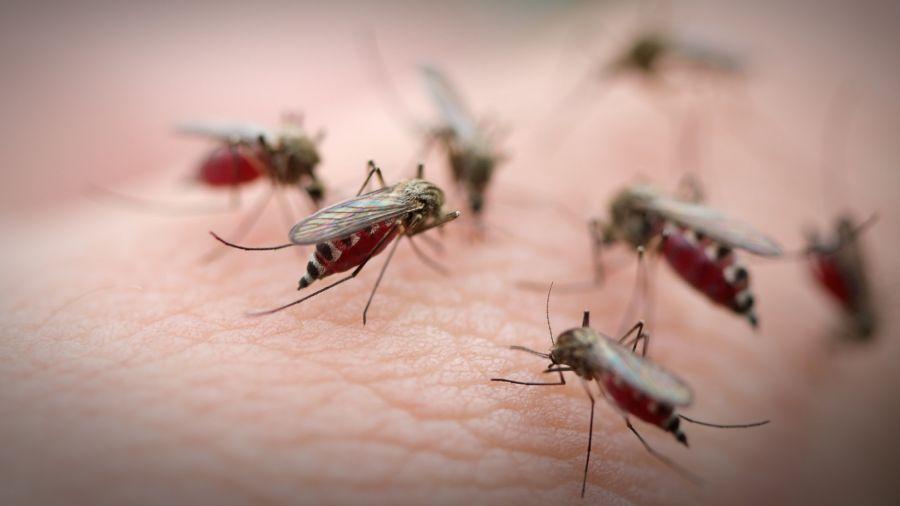 چرا پشهها بعضی افراد را بیشتر از بقیه نیش میزنند؟