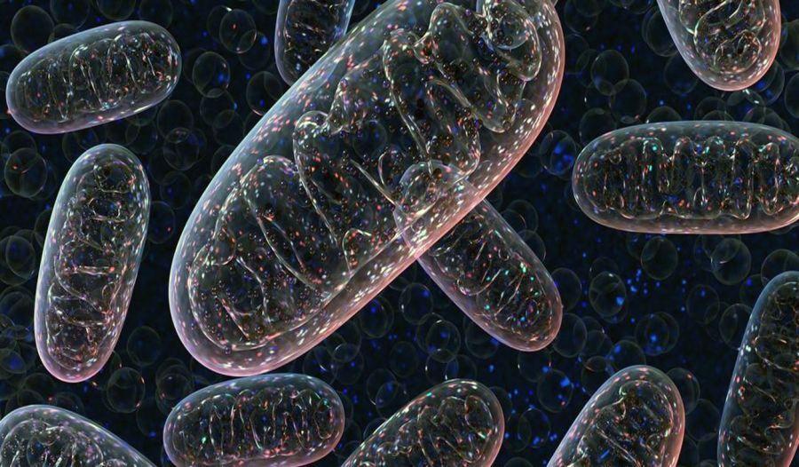 میتوکندری چیست و چه وظیفهای در سلول برعهده دارد؟