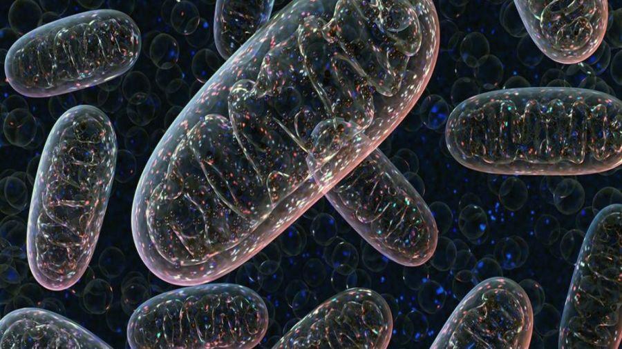 تقویت میتوکندری و ۱۰ راه برای تقویت قدرت سلولی