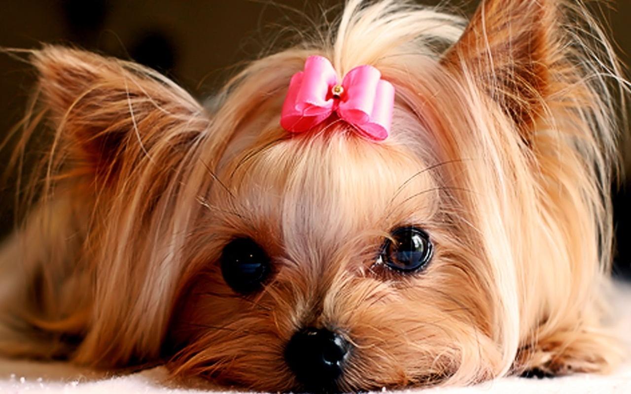 تاثیرات منفی بیماری دیسمپر بر روی سگ