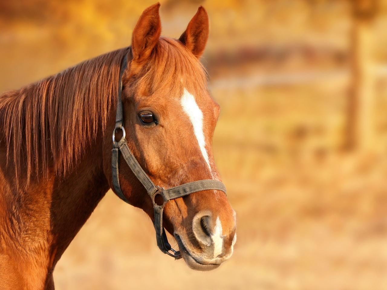عوارض ناشی از بیماری انگلی در اسبها