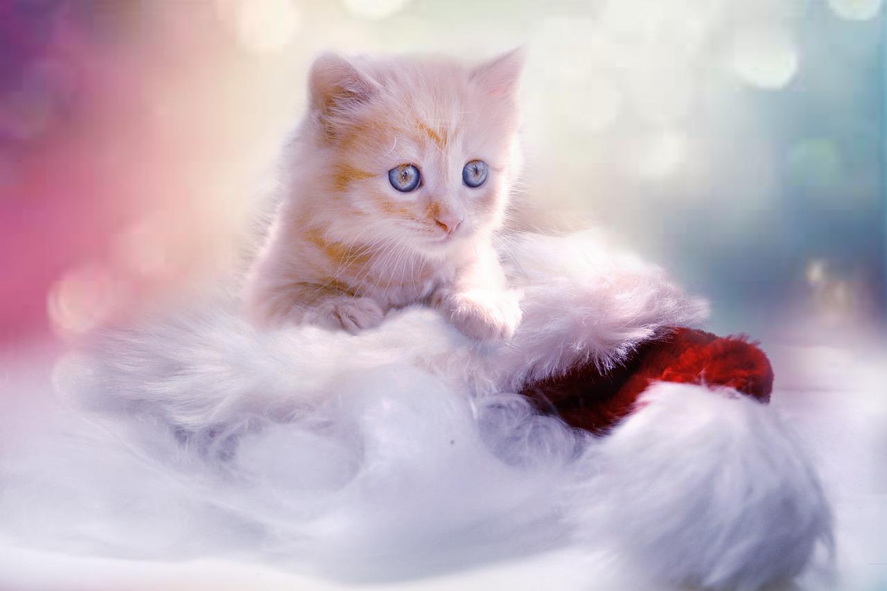 علائم و راههای تشخیص ویروس ایدز ( FIV ) در گربه