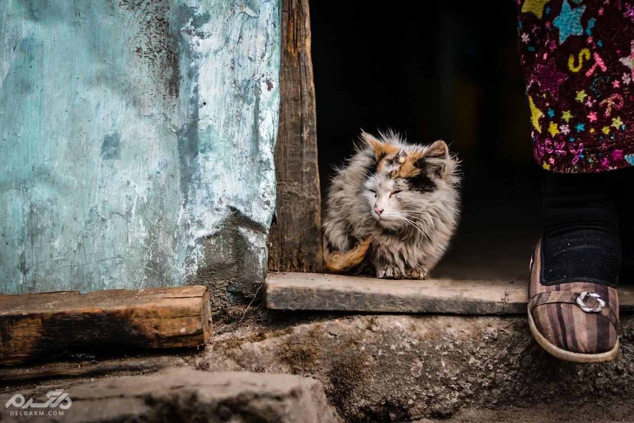 علائم و راههای تشخیص ویروس ایذر( FIV ) در گربه
