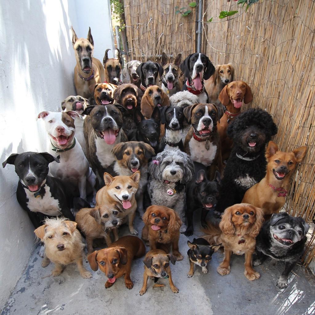 معرفی گران ترین سگهای دنیا