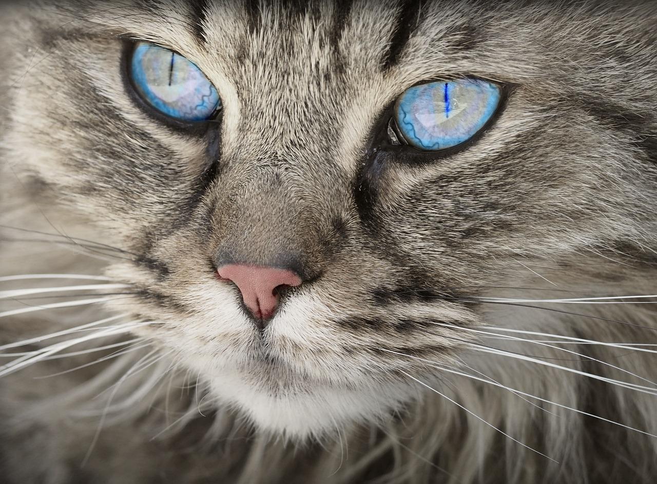 چرا گربه دهانش بوی بد می دهد؟