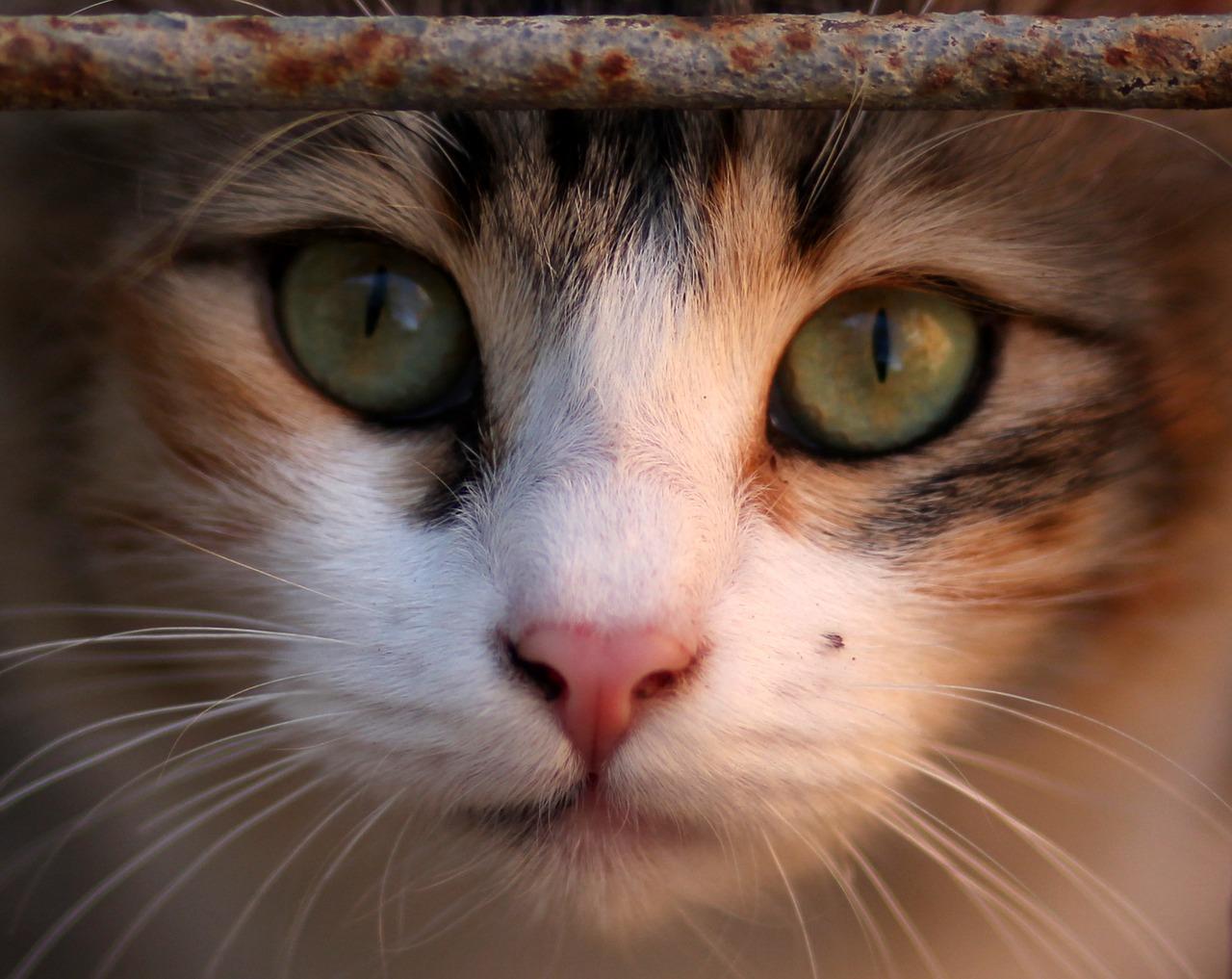 بیماری پریودنتال در گربه چیست و چگونه درمان می شود ؟