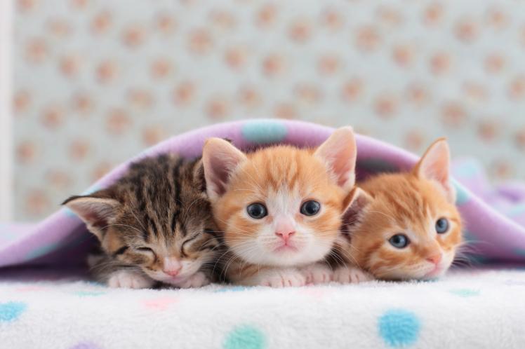 نحوه نگهداری از بچه گربه تازه متولد شده