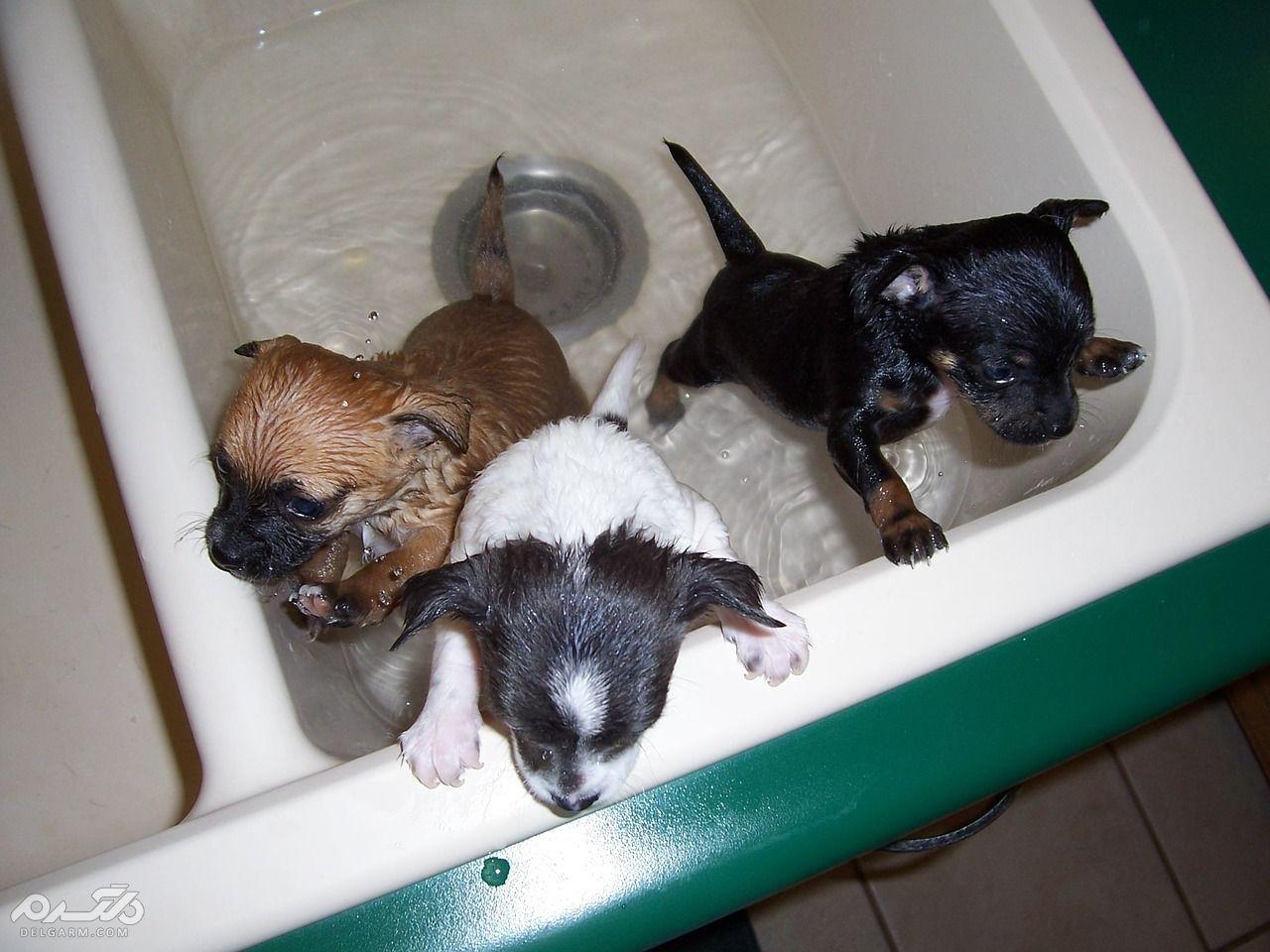 چرا سگ را حمام میدهیم
