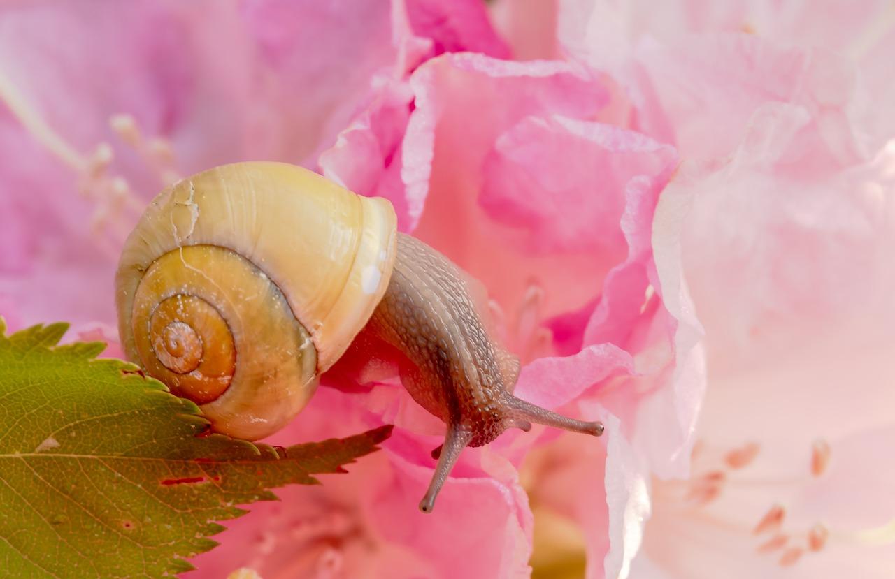 آشنایی با پرورش حلزون ( Snail ) + فیلم