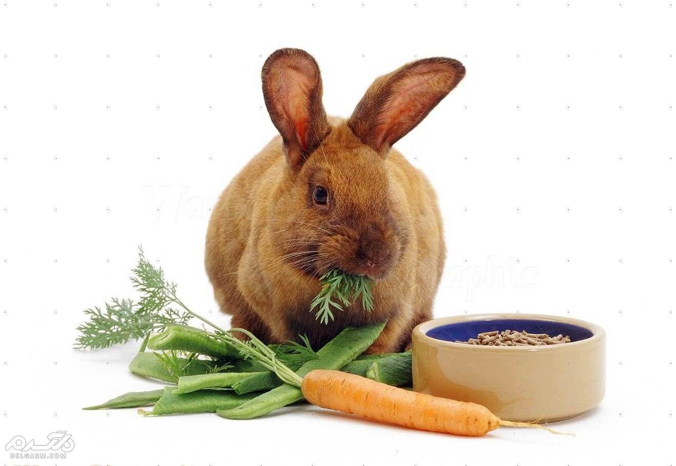 درمان ریزش موی خرگوش