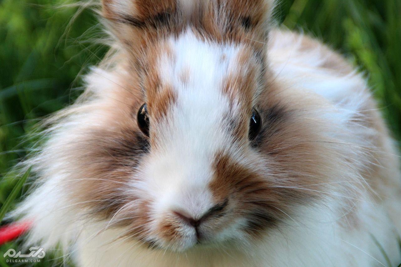 علت ریزش موی خرگوش