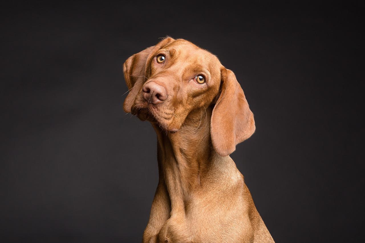 راه تشخیص و درمان سرطان استخوان در سگ ( استئوسارکوم  )