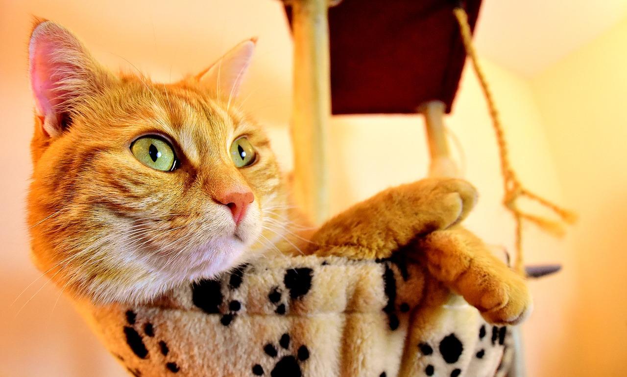 چگونه سرطان در گربه را تشخیص داد ؟
