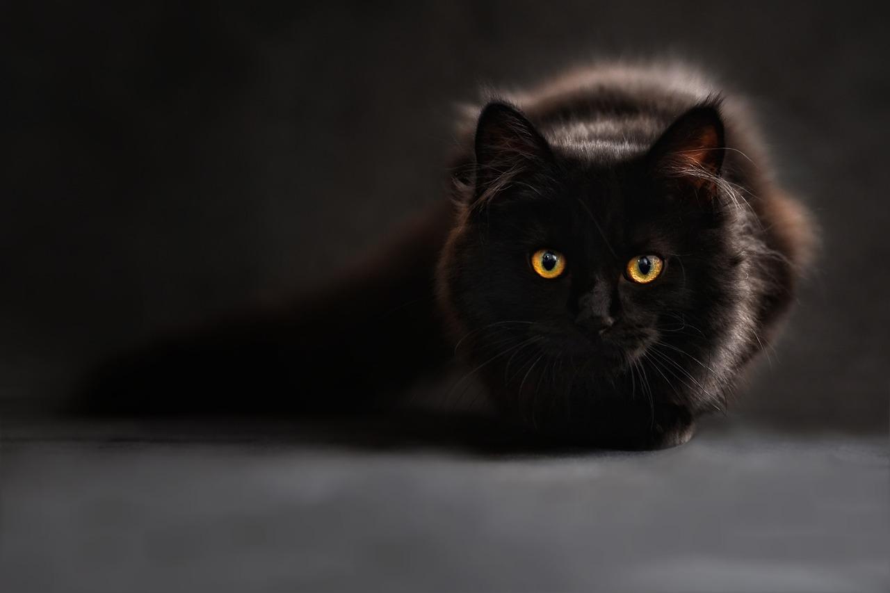آیا می دانید گربه شما چند سال دارد ؟ راههای ساده تشخیص سن گربه