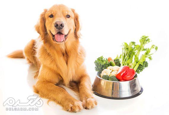 مزایای خوردن سبزیجات برای سگ