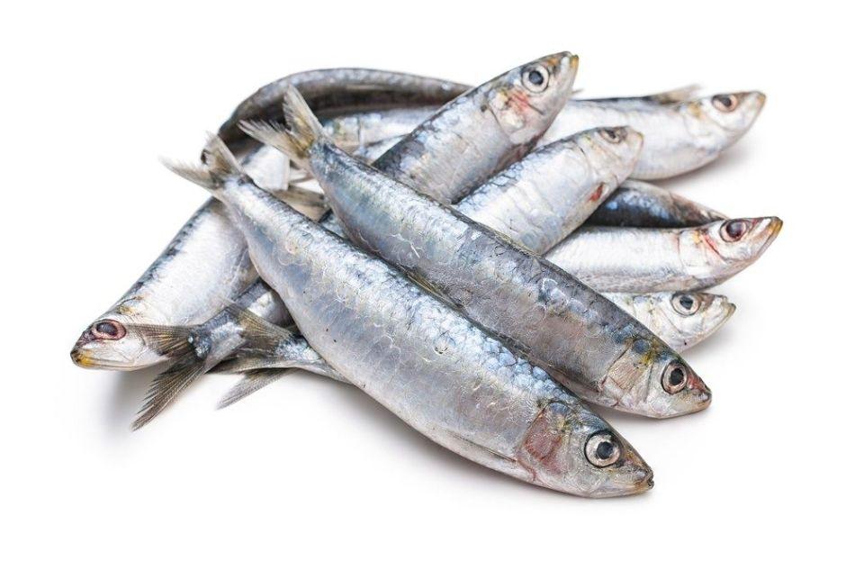 ۱۱ خاصیت شگفت انگیز ماهی ساردین