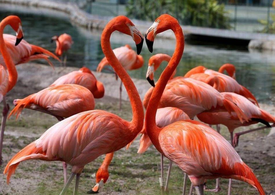 معرفی 9 پرنده ای که میل به همجنس گرایی دارد