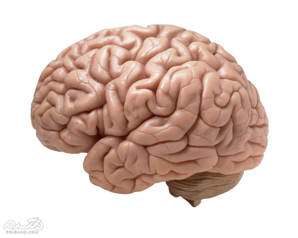 تفاوت مغز زن و مرد