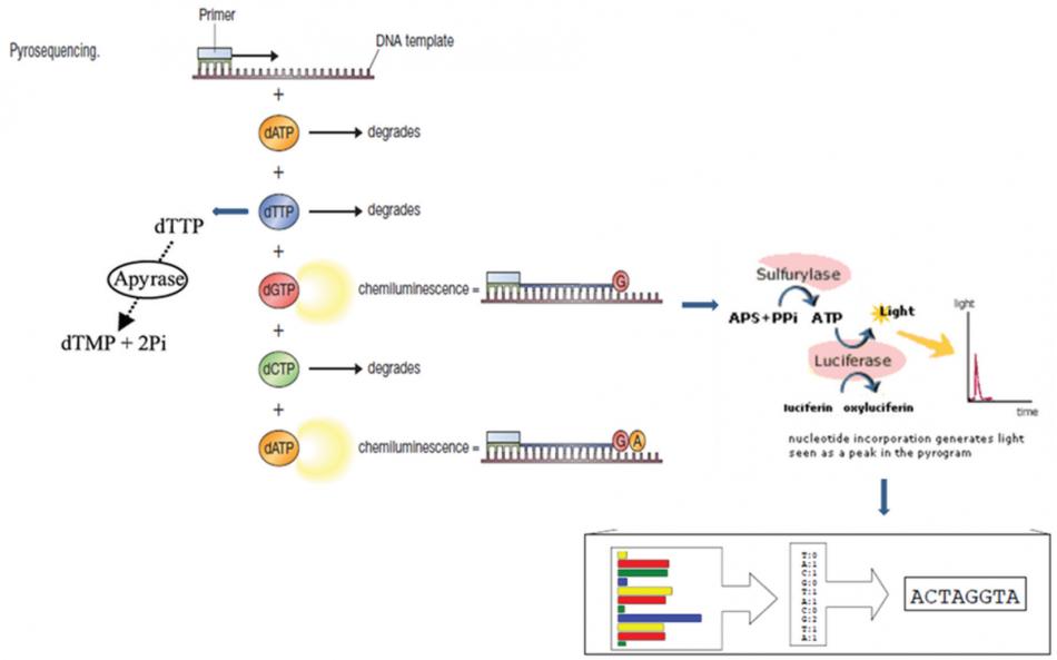 طرح تکنيک هاي توالی یابی ژنتیک برای درمان بیماری های عفونی