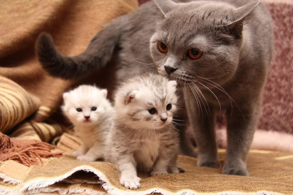چه اقداماتی لازم است که گربه به راحتی زایمان کند