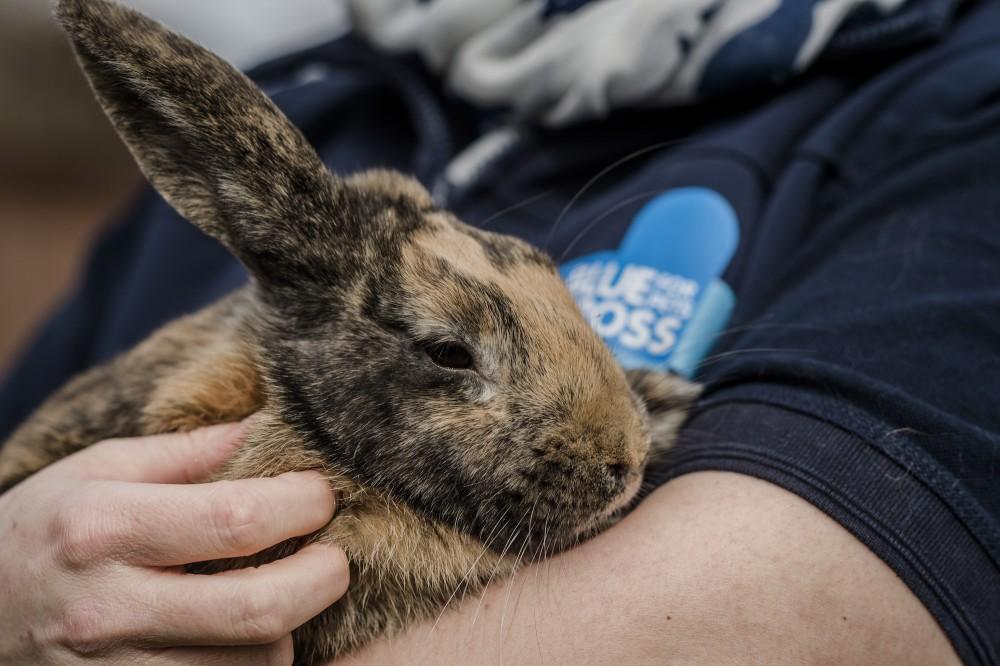 آیا گاز گرفتن خرگوش باعث انتقال بیماری می شود؟