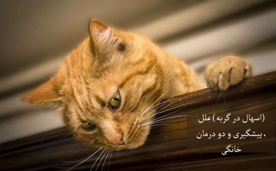 (اسهال در گربه) علل، پیشگیری و دو راه درمان خانگی موثر