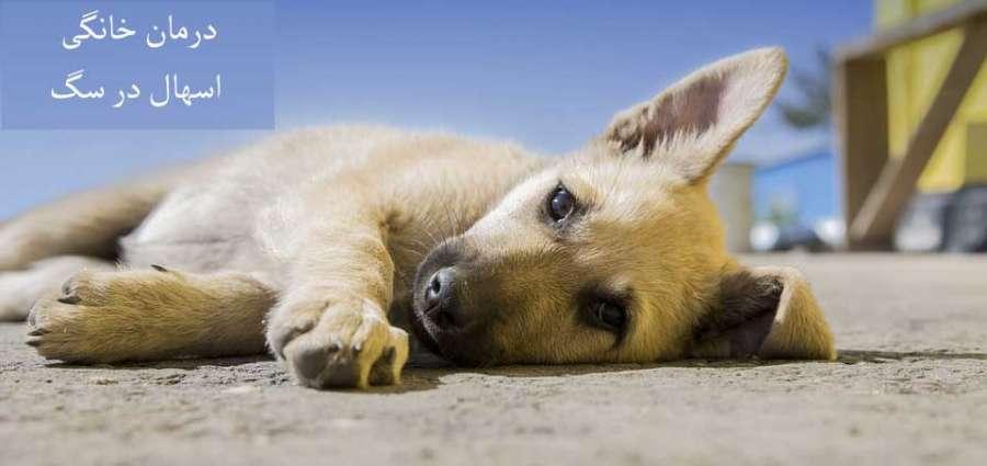 اسهال در سگ :: علائم، تشخیص و درمان خانگی