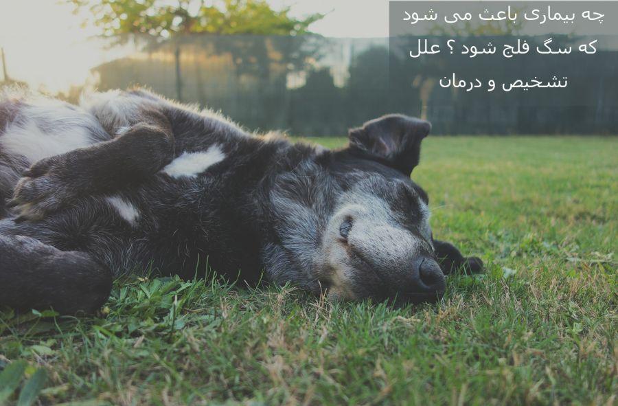 مسمومیت غذایی چه آسیبی به سگ می رساند؟ آیا سگ فلج می شود؟