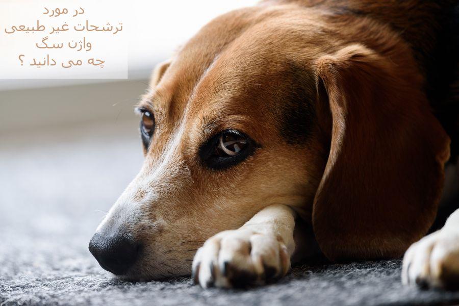 هر آنچه که باید در مورد ترشحات غیر طبیعی واژن سگ باید بدانید !!!