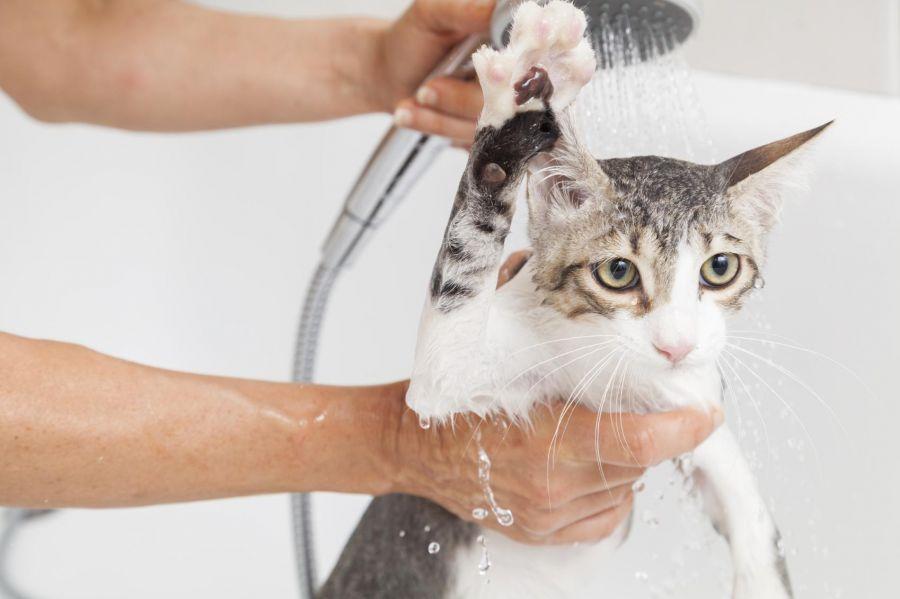 چرا گربه از آب متنفر است؟ دلایل قانع کننده برای حمام ندادن گربه!