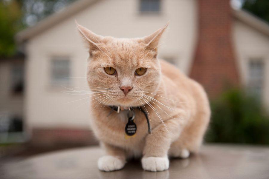 علت ترسیدن گربه چیست؟ و از چه بوی متنفر و عاشق چه بوی هستند؟