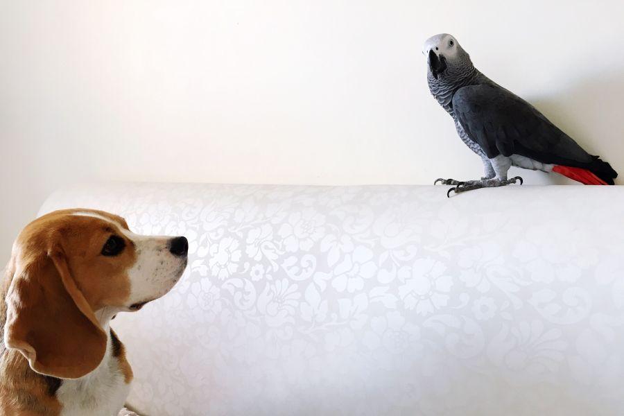 نحوه آرام کردن طوطی هنگام ترس | چگونه بدون ترس دستیش کنیم؟