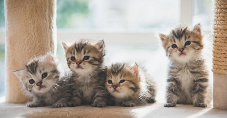 نکات مهم و نحوه صحیح و اصولی کوتاه کردن ناخن گربه بدون درد سر