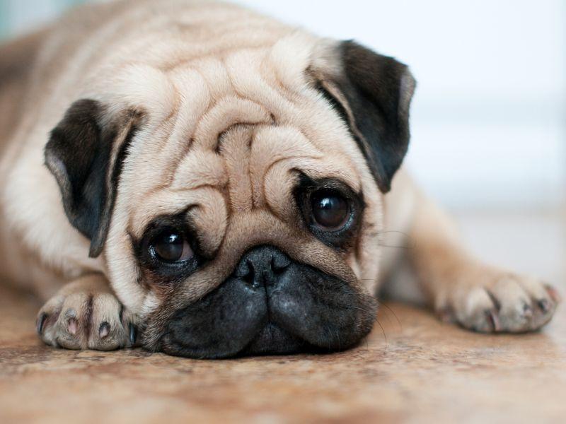 آیا سگ هم ترش می کنه؟ تشخیص و اقدامات فوری برای درمان