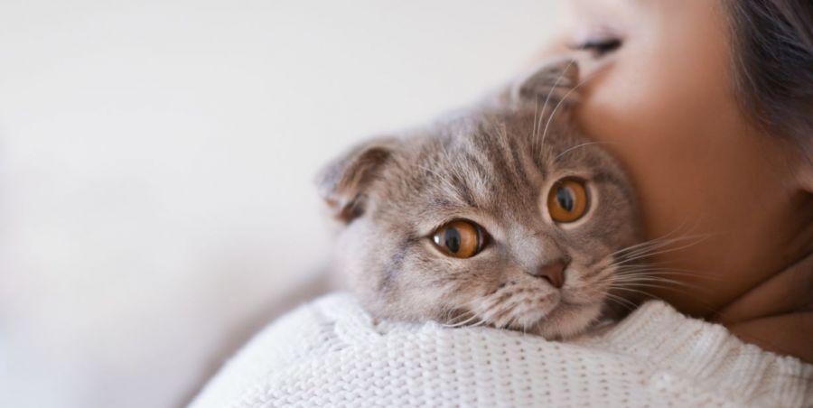 از کجا بفهمم گربه م دوستم داره؟