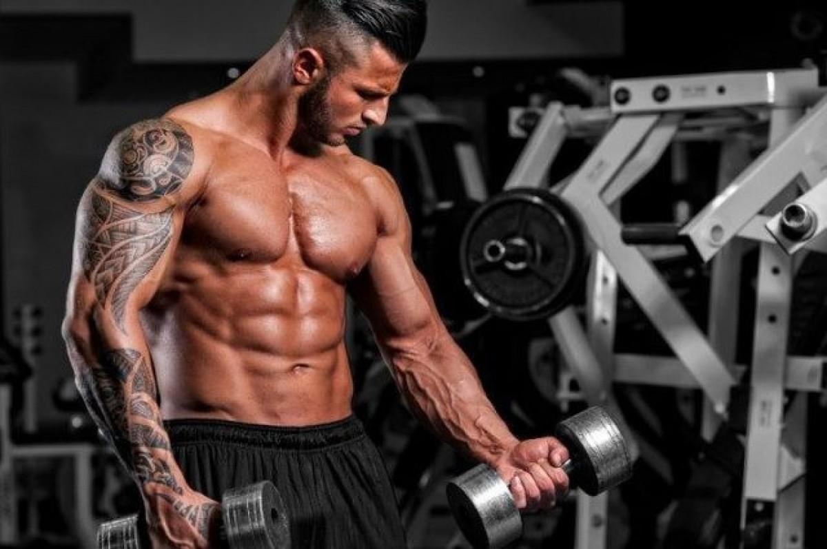 حجم عضلات